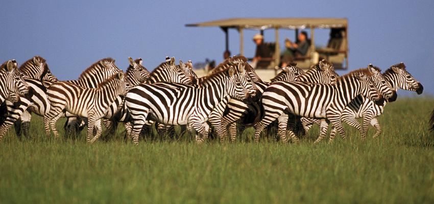 Vé máy bay đi Tanzania