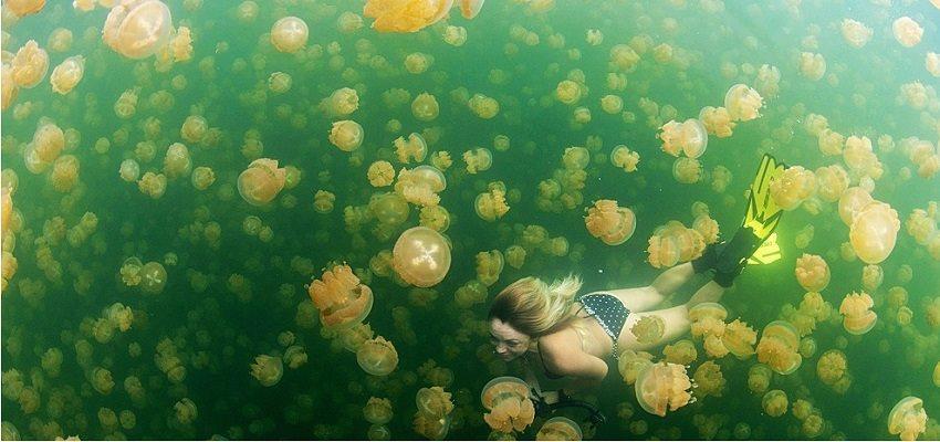 lan biển ở palau