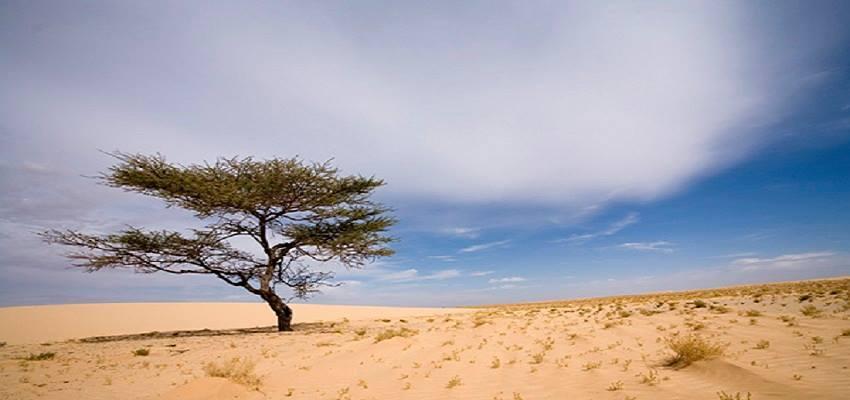 ve may bay den mauritania